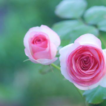 EBRIminiMarket Spring 薔薇と庭雑貨