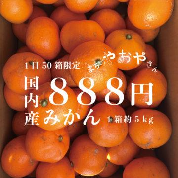 【初売1/4-1/5】みかん限定販売